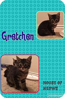 Domestic Shorthair Kitten for adoption in Arlington/Ft Worth, Texas - Gretchen