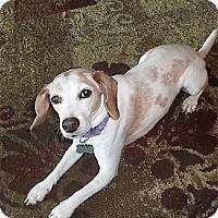 Adopt A Pet :: Shelly - Houston, TX