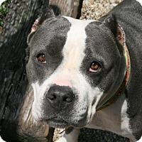 Adopt A Pet :: Marisol - Norfolk, VA