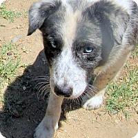 Adopt A Pet :: Elwood - Lindsay, CA