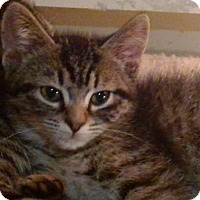 Adopt A Pet :: Abner - Columbus, OH