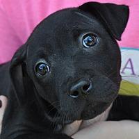 Adopt A Pet :: Poppy - Atlanta, GA