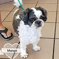 Adopt A Pet :: Mango - Las Vegas, NV