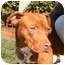 Photo 1 - American Pit Bull Terrier Mix Dog for adoption in Berkeley, California - Punkin