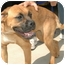 Photo 1 - Boxer Mix Dog for adoption in Gaffney, South Carolina - Andie
