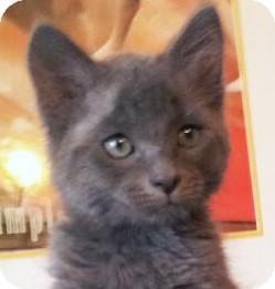 Domestic Mediumhair Kitten for adoption in Irvine, California - Jeffrey