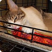 Adopt A Pet :: Gino - Acme, PA