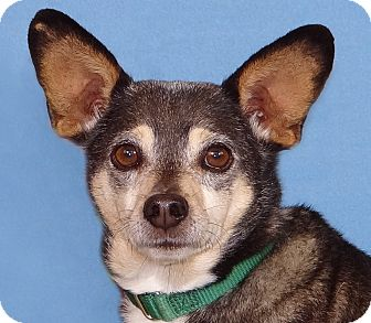 Terrier (Unknown Type, Small) Mix Dog for adoption in Renfrew, Pennsylvania - Hoss