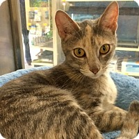 Adopt A Pet :: Bunny - Byron Center, MI