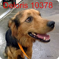 Adopt A Pet :: Delores - Greencastle, NC