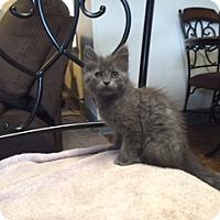 Adopt A Pet :: Sassy - Kelso/Longview, WA
