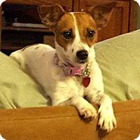 Adopt A Pet :: LACEY - Terra Ceia, FL