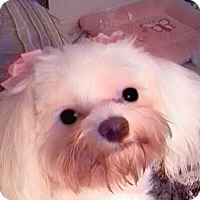 Adopt A Pet :: Zoe Schelle - Omaha, NE