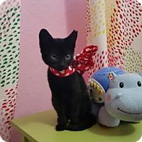 Adopt A Pet :: Peekaboo - Lauderhill, FL