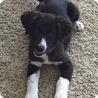 Adopt A Pet :: Katy - Houston, TX