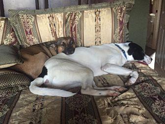 Labrador Retriever Mix Dog for adoption in Lawrenceville, Georgia - Maddie
