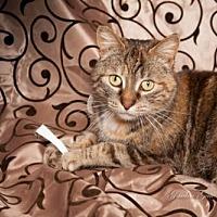 Adopt A Pet :: Amanda - Elizabethtown, PA