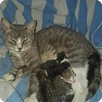 Adopt A Pet :: MIA - Hampton, VA