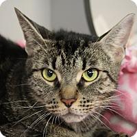 Adopt A Pet :: Baca - Sarasota, FL