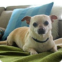 Adopt A Pet :: Marty - St Paul, MN