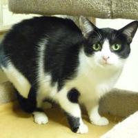 Adopt A Pet :: Momma Friskie - Westville, IN