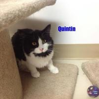 Adopt A Pet :: Quintin - Crossfield, AB