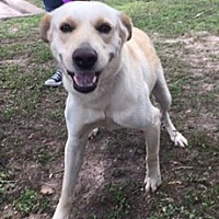 Adopt A Pet :: Comet - Kingwood, TX