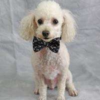 Adopt A Pet :: Fred - St. Petersburg, FL