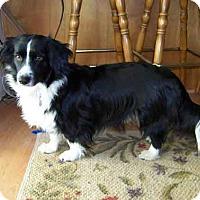 Adopt A Pet :: BLACKIE - Gustine, CA