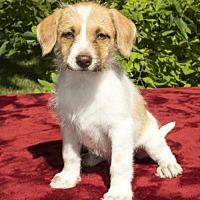 Adopt A Pet :: Pringle-Salty Litter guy - Santa Fe, TX
