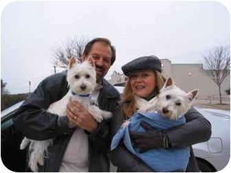 Westie, West Highland White Terrier Dog for adoption in Frisco, Texas - Mackie Adopted