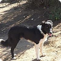 Adopt A Pet :: MacDuff - Phelan, CA