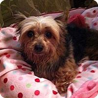 Adopt A Pet :: Jasmine - Fremont, CA