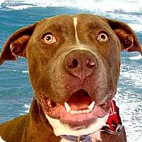 Adopt A Pet :: Heath very URGENT - Sacramento, CA