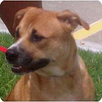 Adopt A Pet :: Nya - Houston, TX