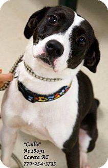Pointer Mix Dog for adoption in Newnan City, Georgia - Callie