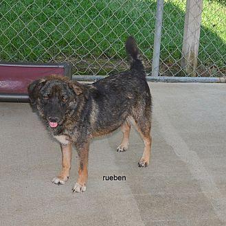 Shepherd (Unknown Type) Mix Dog for adoption in Grenada, Mississippi - Reuben