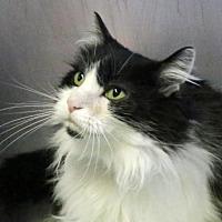 Adopt A Pet :: Jessie - Roseville, CA