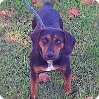 Adopt A Pet :: Madison - Metamora, IN