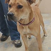 Adopt A Pet :: Rousey - Trenton, MO
