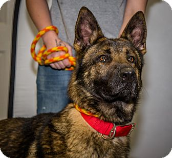 German Shepherd Dog Mix Dog for adoption in Martinsville, Indiana - Max