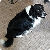 Adopt A Pet :: Buddy - New Philadelphia, OH