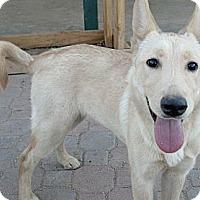 Adopt A Pet :: Star - Gilbert, AZ