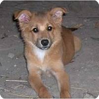 Adopt A Pet :: Tilly - Clayton, OH