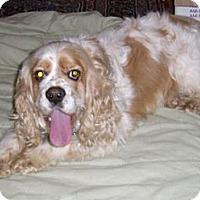Adopt A Pet :: ZACH - Toluca Lake, CA