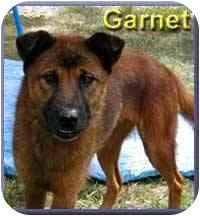 German Shepherd Dog Mix Dog for adoption in Aldie, Virginia - Garnet