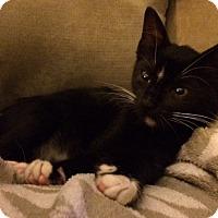 Adopt A Pet :: Joey - Delray Beach, FL