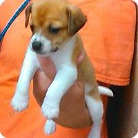 Adopt A Pet :: Scotty - Clarksville, TN