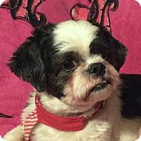 Adopt A Pet :: Baylee - San Francisco, CA