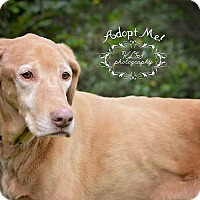 Adopt A Pet :: Santana - Fort Valley, GA